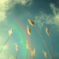 安静向太阳